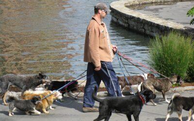 Hundeseler giver mere komfortable løsninger til gåturen
